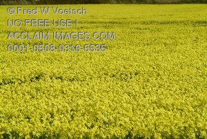 Clip Art Stock Photo of a Field of Yellow Flowers