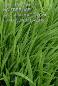 Clip Art Stock Photo of Green Grass