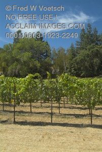 Clip Art Stock Photo of a Vineyard