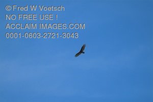 Bird of Prey Stock Photograph
