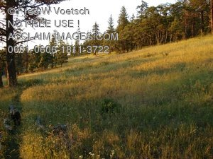 Clip Art Stock Photo of a Meadow in The Forest on an Oregon Mountain