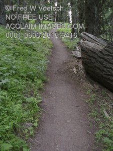 Clip Art Stock Photo of a Trail in the Forest
