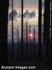 Stock Photo of a Fire Damaged Forest in Oregon