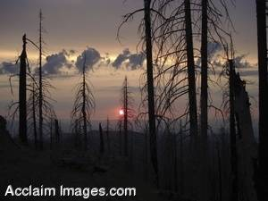 Stock Photo of a Cloudy Sunset Seen Through a Forest Fire Burns Clearing