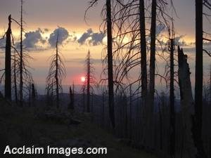 Stock Photo of a Forest Fires Remains