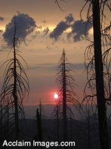 Stock Photo of Fire Burned Trees in Oregon