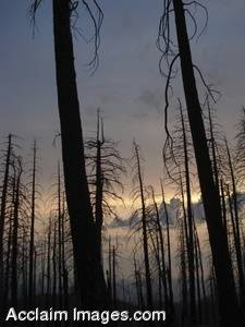 Stock Photo of Burned Forestry in Oregon