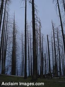 Stock Photo of Burned Trees Southern Oregon