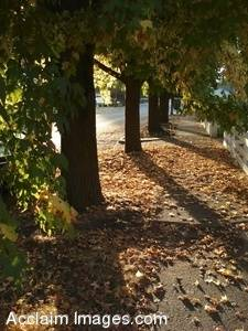 Stock Photo of a Sidewalk Filled With Autumn Leaves