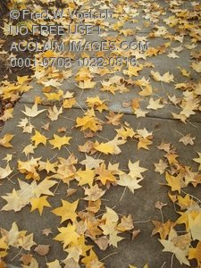 Clip Art Stock Photo of Autumn Leaves on a Sidewalk