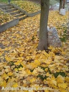 Stock Photo of Bagged Leaves left at the Curb with Newly Fallen Leaves