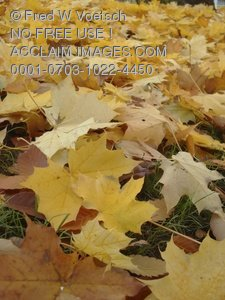 Clip Art Stock Photo of Colorful Fall Leaves on the Ground