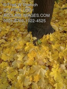 Clip Art Stock Photo of Colorful Fall Leaves at the Base of a Tree