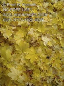Clip Art Stock Photo of Colorful Fall Leaves