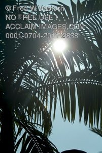 Clip Art Stock Photo of the Sun Beating Down Through the Branches of a Palm Tree