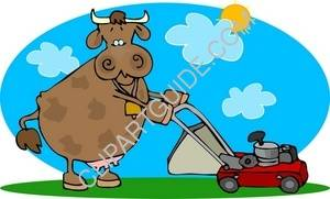 Cow And A Lawnmower