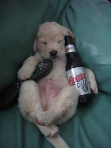 Dog Passed Out On the Couch with a TV Remote Controller and a Bottle of Beer