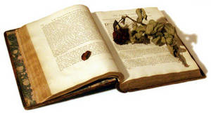 Free Picture of a Withered Rose on an Antique Book