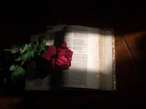 Free Picture of 1581 Psalter with Rose in Vignette