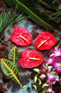 Free Photo of  Tropical Flowers