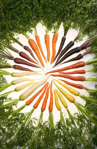 Free Photo of a Rainbow of Carrots