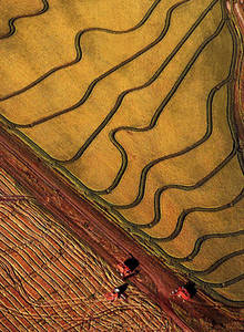 Clipart of an Ariel View of Crops