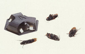 Free Photo of Dead Cockroaches