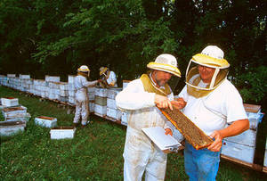 Free Photo of Bee Colony Inspection