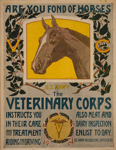Free Picture of a WWI Army Recruiting Poster for Veterinarians