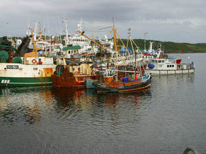 Free Photo of Fishing Boats in Killybegs, Ireland