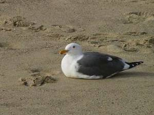 Free Photo of Seagull Sitting in the Sand