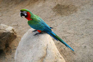 Free Photo of a Multi-Colored Parrot
