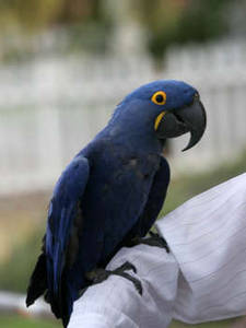 Free Photo of a Blue Parrot