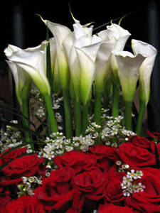 Free Picture of an Arrangement of Red Roses, Calla Lilies and Baby's Breath