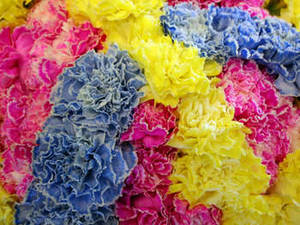 Free Picture of a Bunch of Carnations