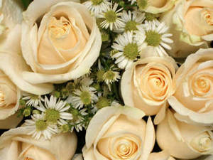 Free Photo of Cream Colored Roses