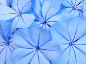 Free Photo of a Blue Flowers
