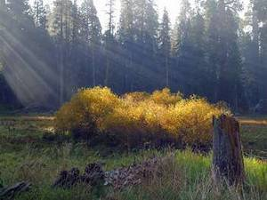 Free Photo of a Sunlit Meadow in the Sequoias