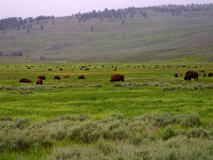 Free Picture of Lamar Valley in Yellowstone