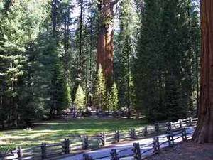 Free Photo of Sequoia National Park