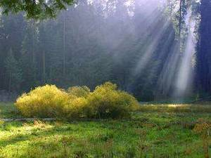 Free Image of a Morning Meadow in the Sequoias