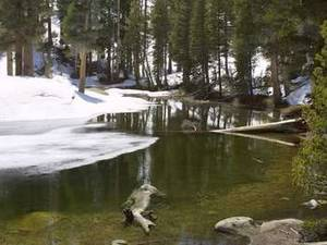 Free Photo of Snowy Riverbank, Sequoia National Park