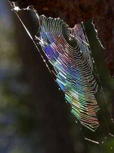 Free Picture of  a Spider's Web
