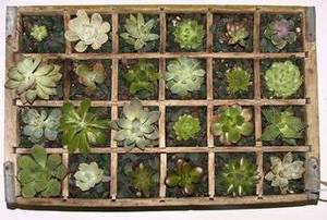 Free Picture of A Wooden Box of Cactus