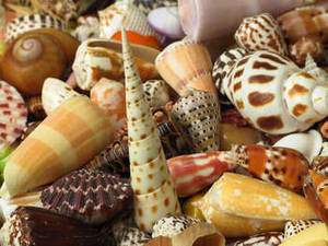 Free Picture of Various Seashells
