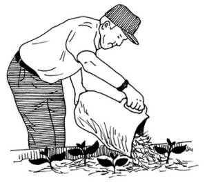 Free Clipart Picture of a Man Mulching a Garden