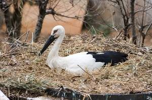 Free Photo of A Stork In It's Nest, Tama Zoological Park