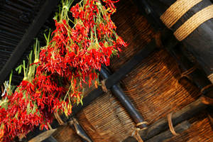 Free Picture of Cayenne Peppers Drying