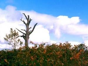 Free Picture of a Dead Tree on a Hill in Japan
