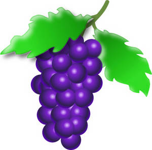Free Clipart Picture of a Bunch of Purple Grapes